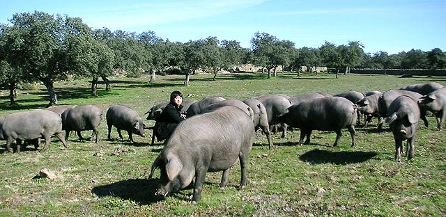 イベリコ豚と店長
