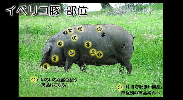 豚の画像 p1_10