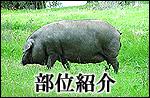 イベリコ豚部位説明